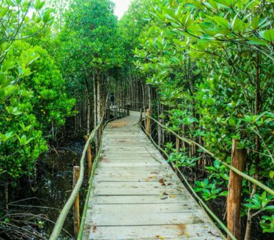 brown-wooden-bridge-beside-green-leafy-trees-726298