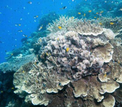 Coral-Moore-reef-SLR-20181129-CALYPSO©2018-SJI-6457-scaled-min