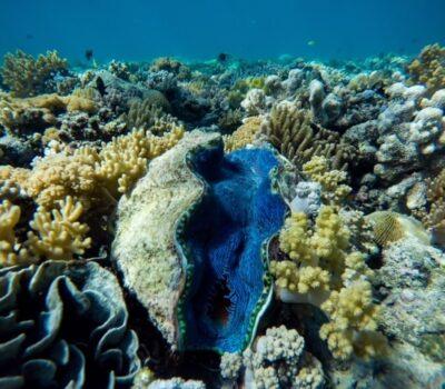 giant-clam-min